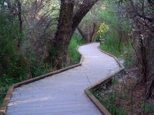 Boardwalk through Big Morongo Canyon Preserve