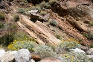 Andreas Canyon rock formations