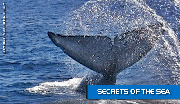 DolphinWorks | Secrets of the Sea