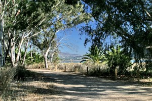 Batiquitos Lagoon trail