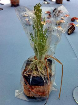 Coastal Sage living plant gift